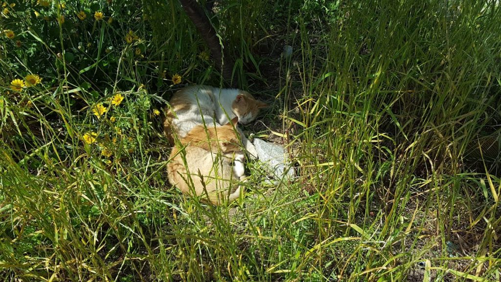 Kitties hiding in the bushes!