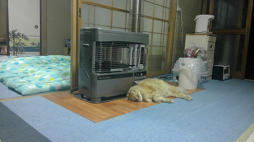 This cat has the right idea (license) image source