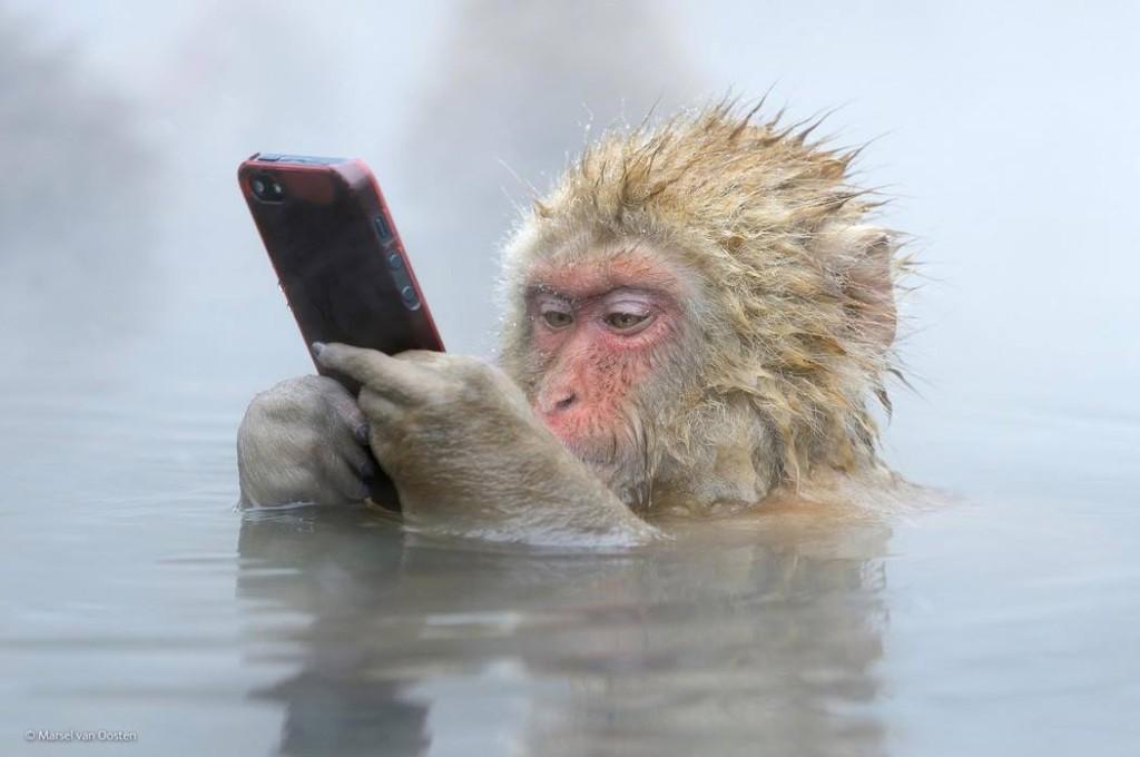 Nagano - Monkeys