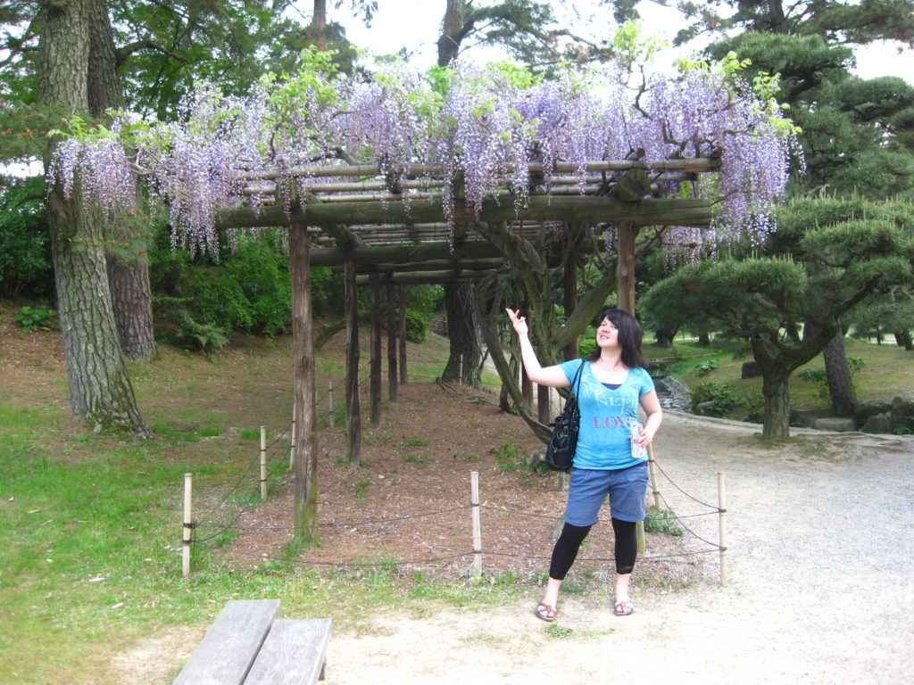 Wisteria blooming at Ritsurin Park